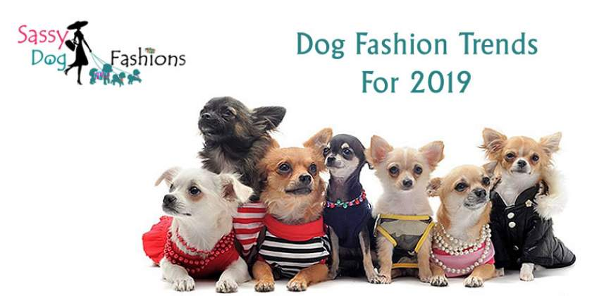 Top dog fashion trends to follow in 2019