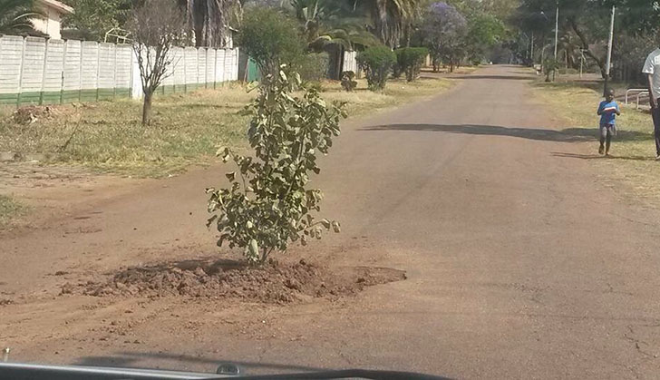 Residents Plant Tree In Pothole Whats Update