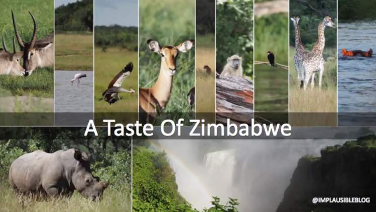 WATCH: A Taste Of Zimbabwe by UK bloggers