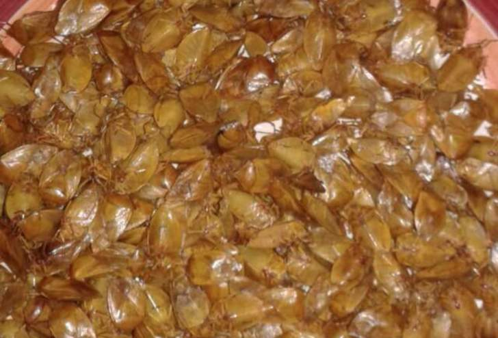 Harurwa consumed as delicacy in Masvingo but Claude Maredza says, 'there is more that people should know'