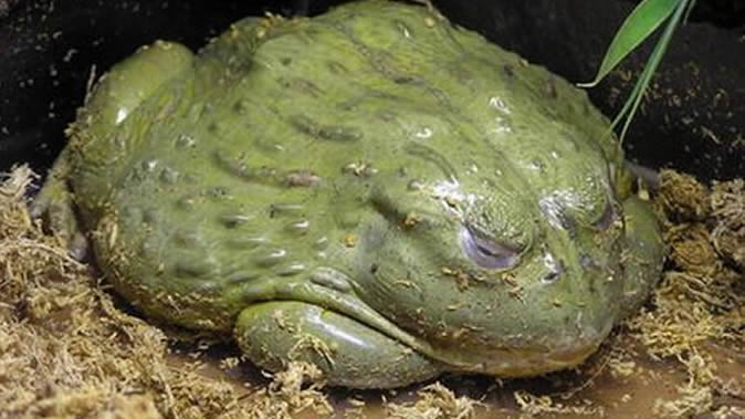 ... scare as woman dies after seeing bullfrog :: Harare24 News