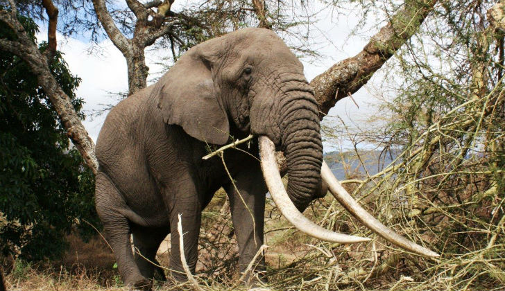 Confusion as Zimbabwe promises review of elephant exports amidst global condemnation