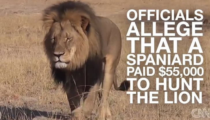 Zimparks issue statement on professional hunter who killed lion