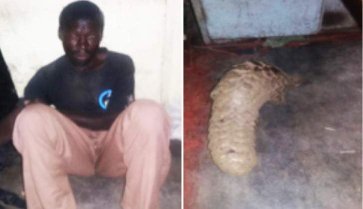 Zimparks authorities reward pangolin trade whistle blower