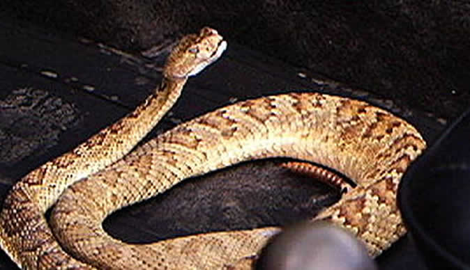 My Wife Turned Into Snake Court Told Harare24 News