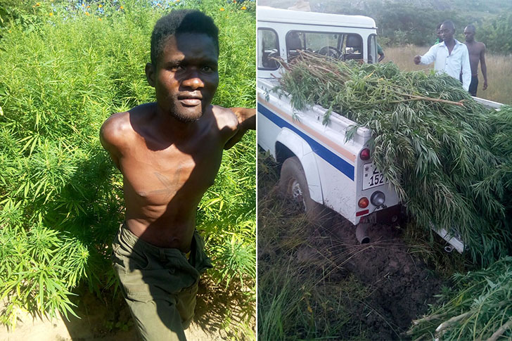 PHOTOS: Ganja farmer nabbed